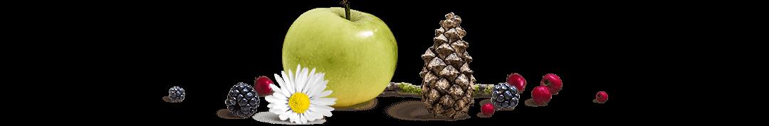 apple, flower, berries, pinecone